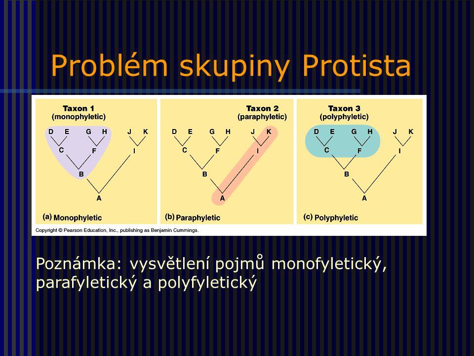 Problém skupiny Protista Poznámka: vysvětlení pojmů monofyletický, parafyletický a polyfyletický