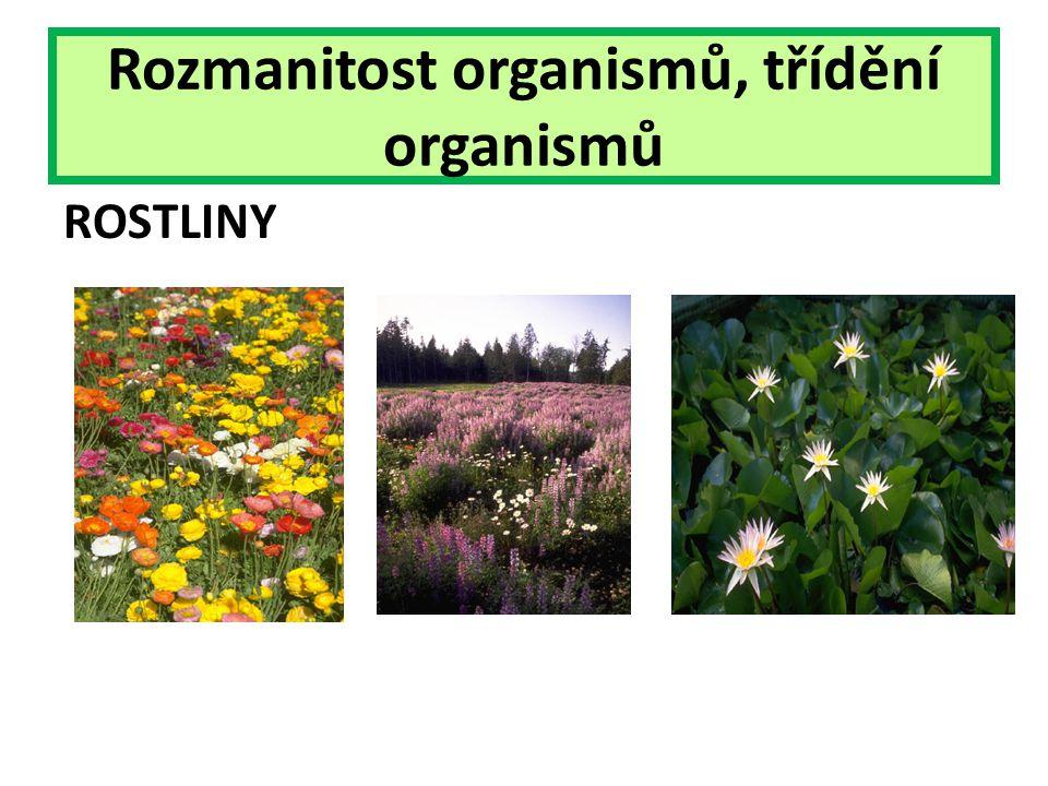 Rozmanitost organismů, třídění organismů ROSTLINY