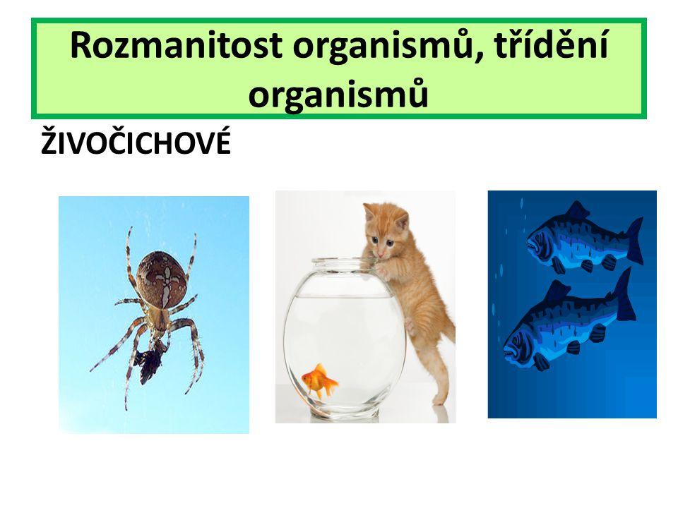 Rozmanitost organismů, třídění organismů ŽIVOČICHOVÉ