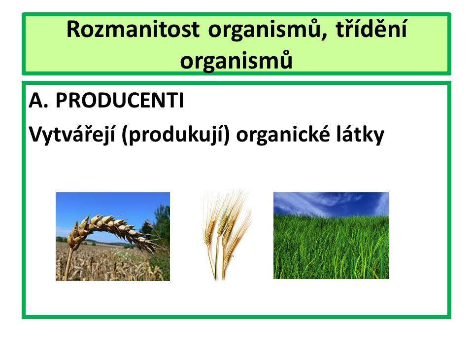 Rozmanitost organismů, třídění organismů A.PRODUCENTI Vytvářejí (produkují) organické látky
