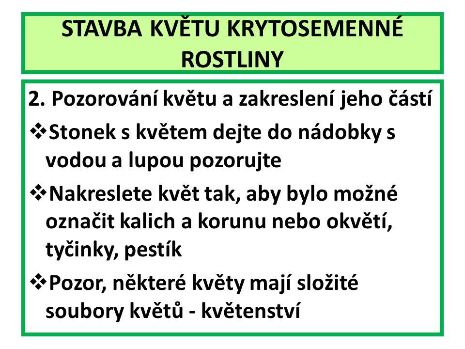STAVBA KVĚTU KRYTOSEMENNÉ ROSTLINY 2.