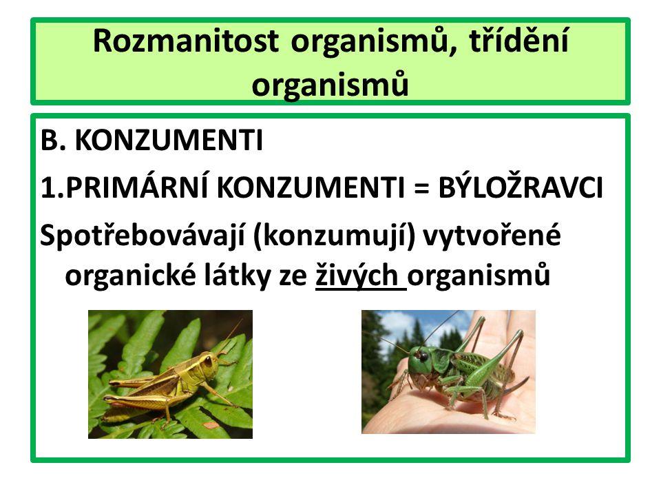 Rozmanitost organismů, třídění organismů B.