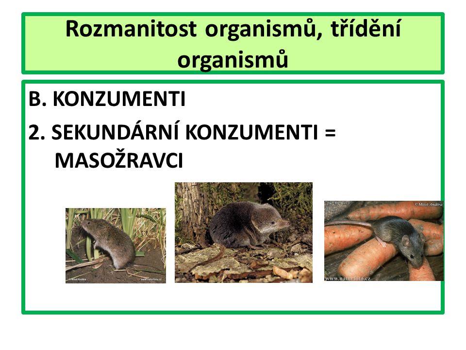 Rozmanitost organismů, třídění organismů B. KONZUMENTI 2. SEKUNDÁRNÍ KONZUMENTI = MASOŽRAVCI