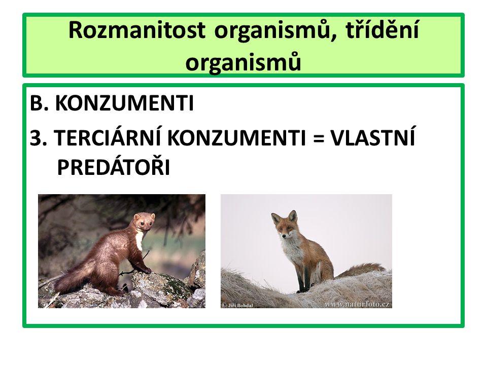 Rozmanitost organismů, třídění organismů B. KONZUMENTI 3. TERCIÁRNÍ KONZUMENTI = VLASTNÍ PREDÁTOŘI