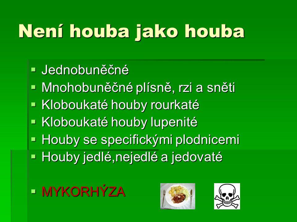 Není houba jako houba  Jednobuněčné  Mnohobuněčné plísně, rzi a sněti  Kloboukaté houby rourkaté  Kloboukaté houby lupenité  Houby se specifickými plodnicemi  Houby jedlé,nejedlé a jedovaté  MYKORHÝZA