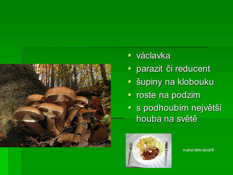  václavka  parazit či reducent  šupiny na klobouku  roste na podzim  s podhoubím největší houba na světě nutné déle dusit !!