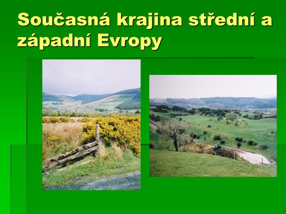 Jeden z nejhojnějších druhů – pěnkava obecná Zimu tráví většinou v J Evropě, první přilétá sameček (vlevo).