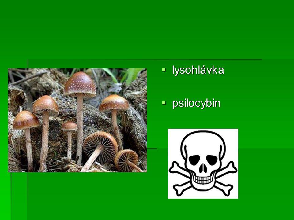  lysohlávka  psilocybin