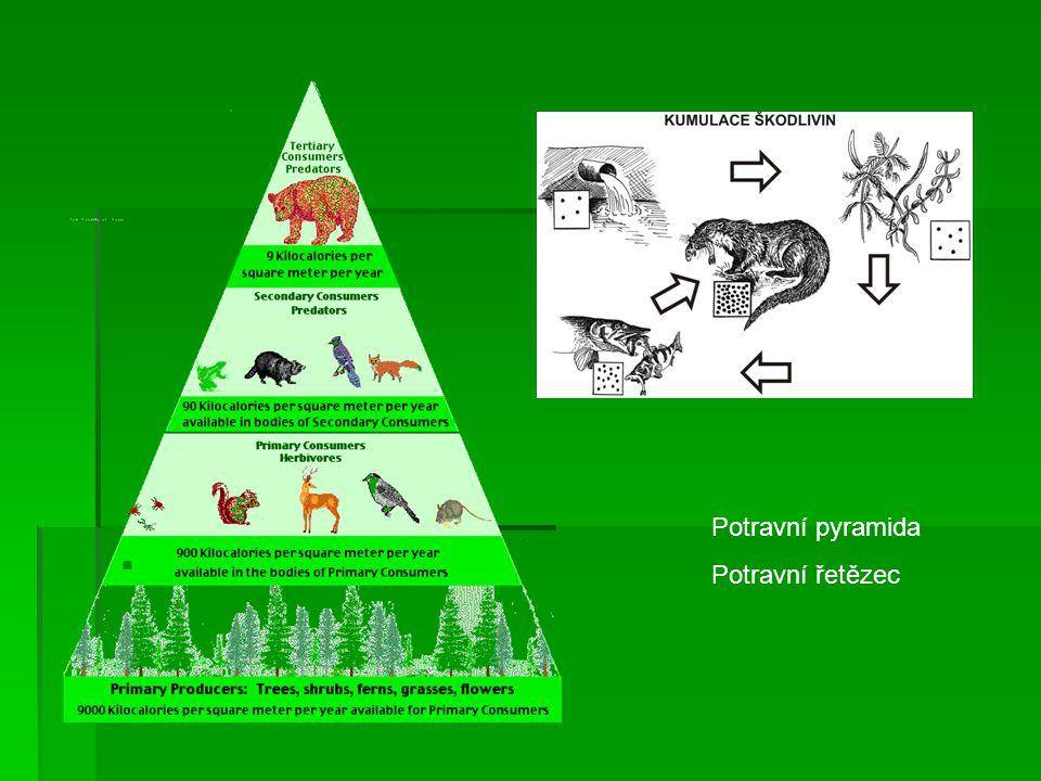 Potravní pyramida Potravní řetězec
