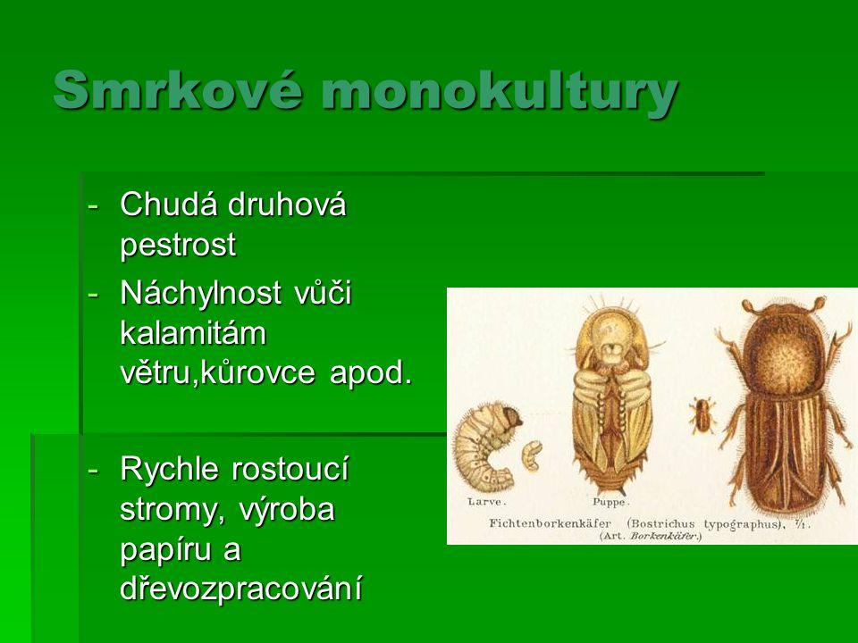 Smrkové monokultury -Chudá druhová pestrost -Náchylnost vůči kalamitám větru,kůrovce apod.