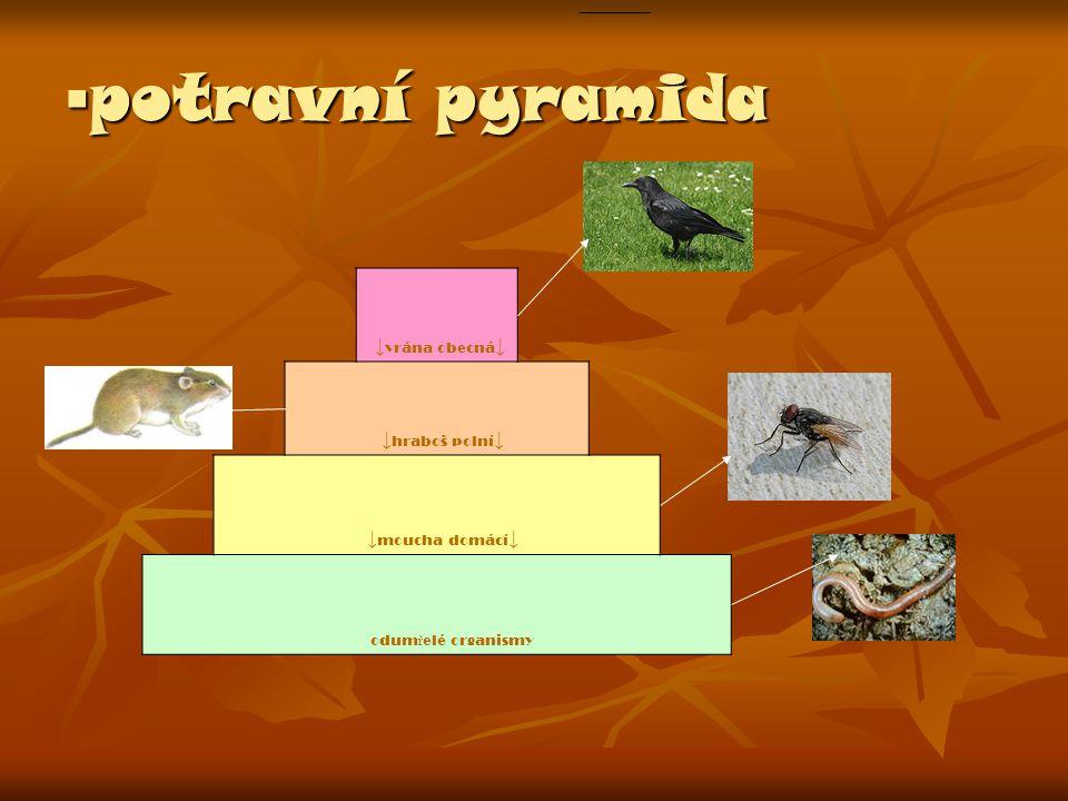▪ potravní pyramida ↓ vrána obecná ↓ ↓ hraboš polní ↓ ↓ moucha domácí ↓ odum ř elé organismy