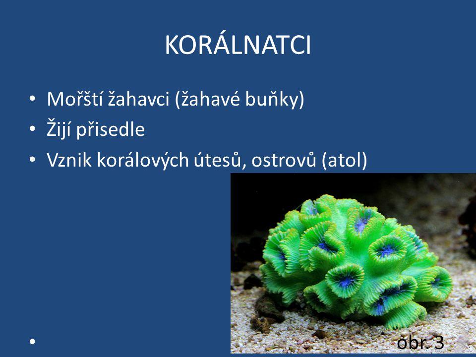 KORÁLNATCI Mořští žahavci (žahavé buňky) Žijí přisedle Vznik korálových útesů, ostrovů (atol) obr. 3