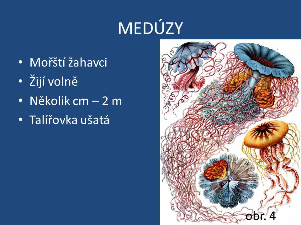 MEDÚZY Mořští žahavci Žijí volně Několik cm – 2 m Talířovka ušatá obr. 4