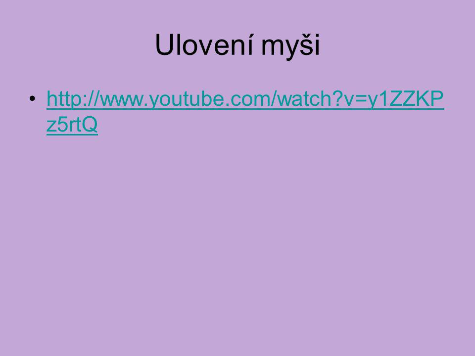 Ulovení myši http://www.youtube.com/watch?v=y1ZZKP z5rtQhttp://www.youtube.com/watch?v=y1ZZKP z5rtQ