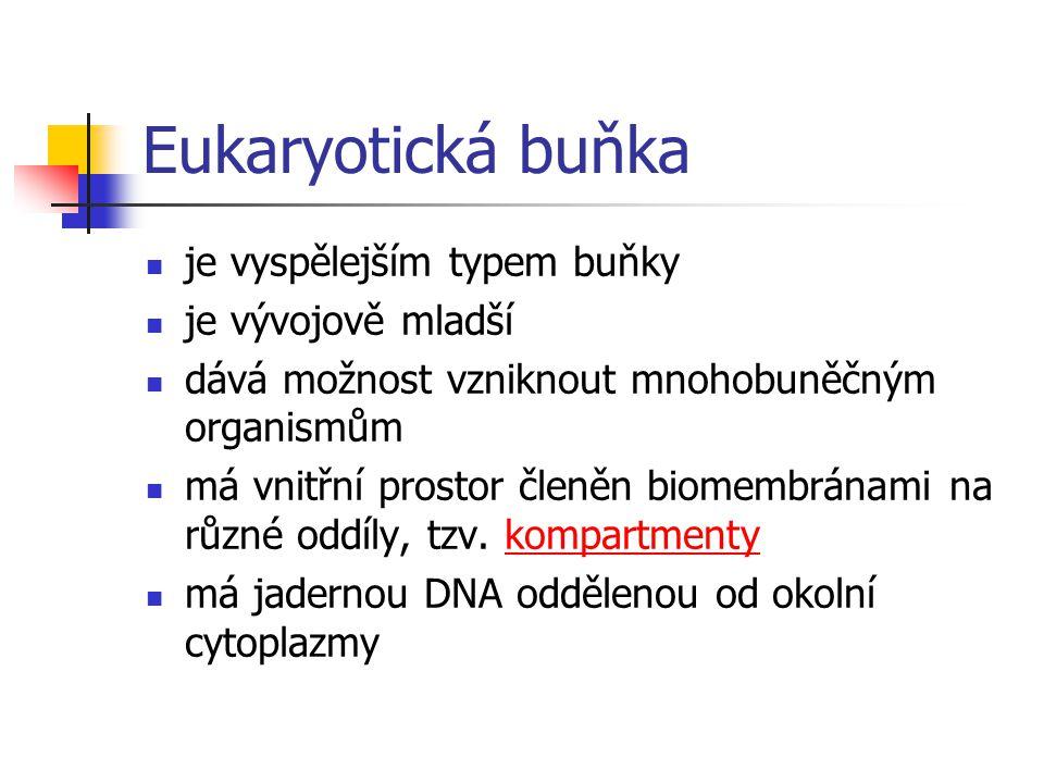 Eukaryotická buňka je vyspělejším typem buňky je vývojově mladší dává možnost vzniknout mnohobuněčným organismům má vnitřní prostor členěn biomembrána