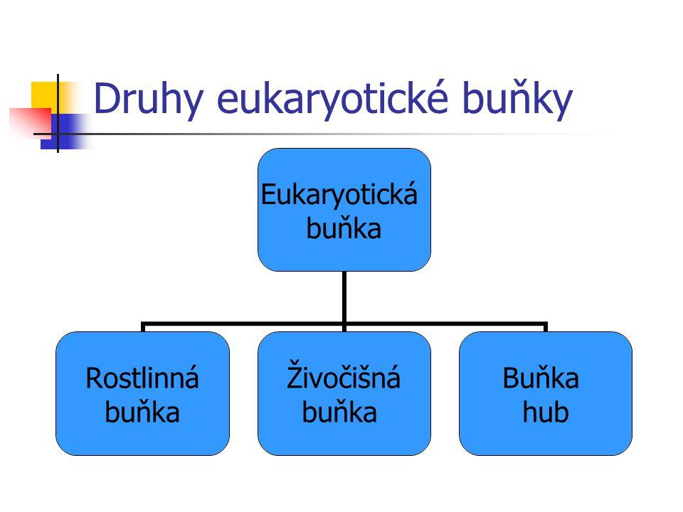 Druhy eukaryotické buňky Eukaryotická buňka Rostlinná buňka Živočišná buňka Buňka hub