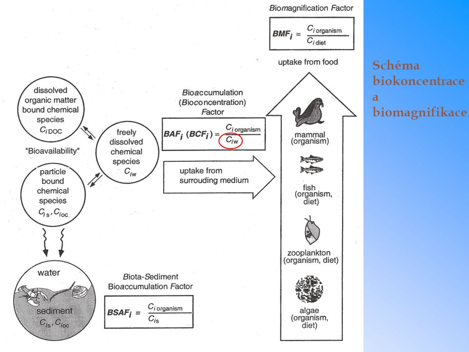 Schéma biokoncentrace a biomagnifikace