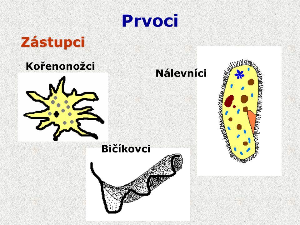 Živí se bakteriemi, řasami, drobnými živočichy Pohybují se přeléváním Kořenonožci Svoji kořist obklopí panožkami a vstřebá Někteří se živí paraziticky – Měňavka úplavičná