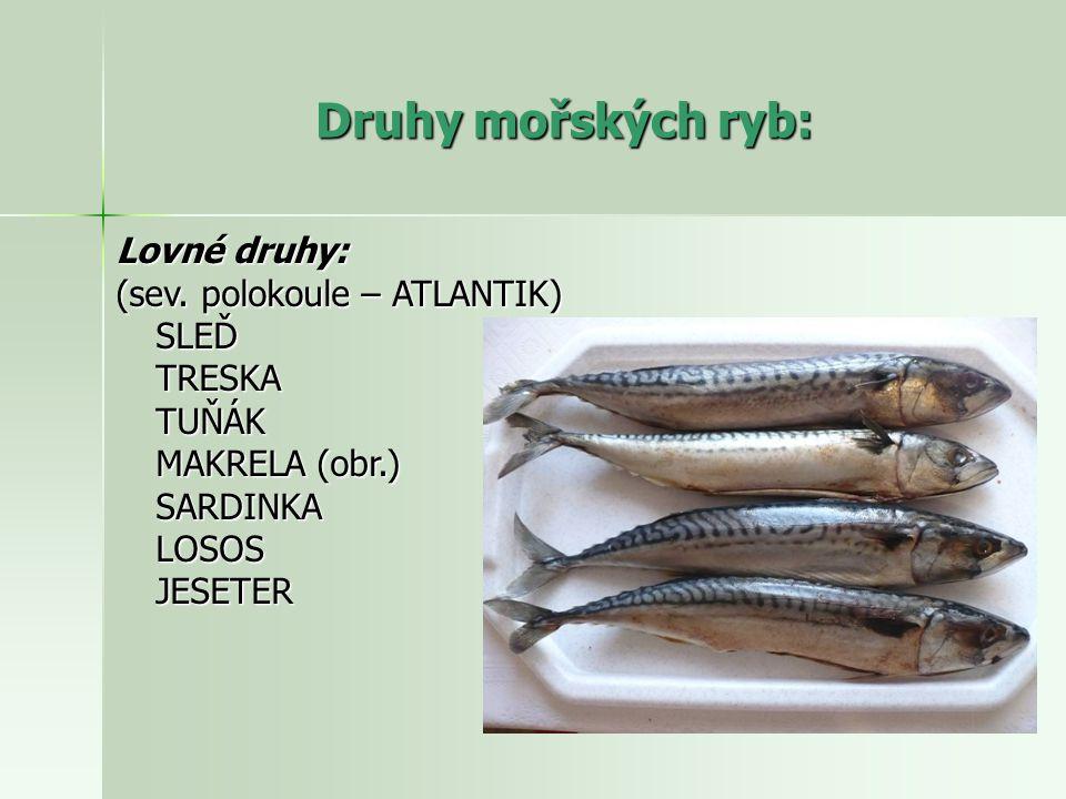Druhy mořských ryb: Lovné druhy: (sev. polokoule – ATLANTIK) SLEĎTRESKATUŇÁK MAKRELA (obr.) SARDINKALOSOSJESETER