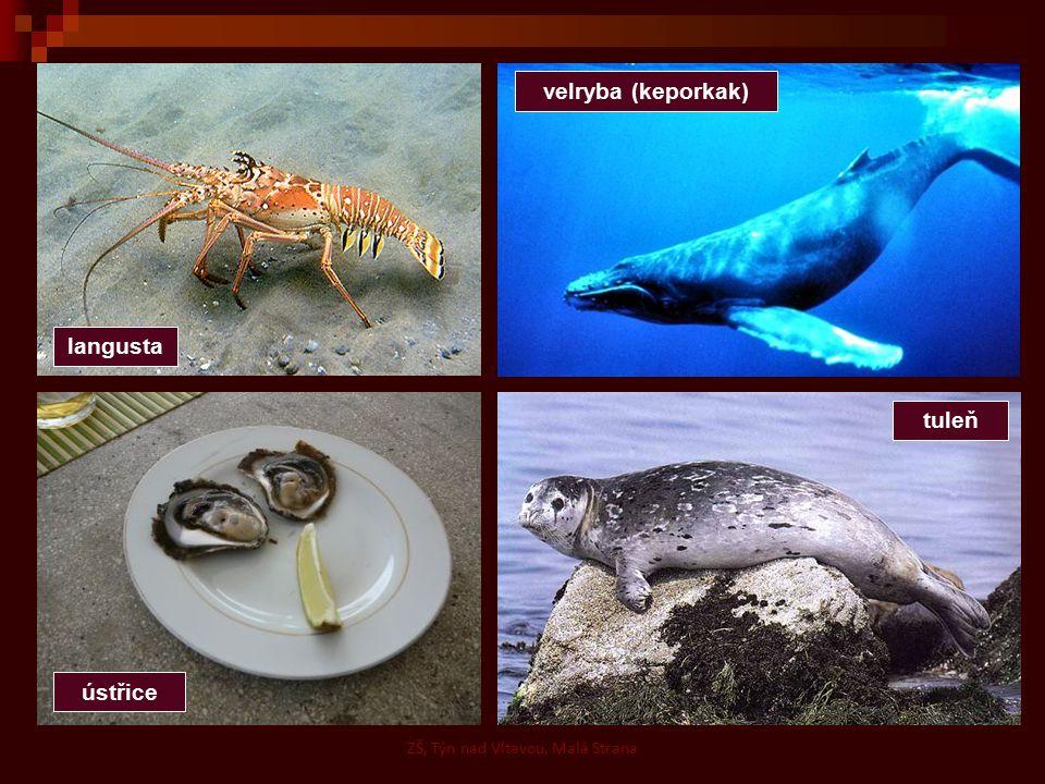 langusta ústřice tuleň velryba (keporkak) ZŠ, Týn nad Vltavou, Malá Strana
