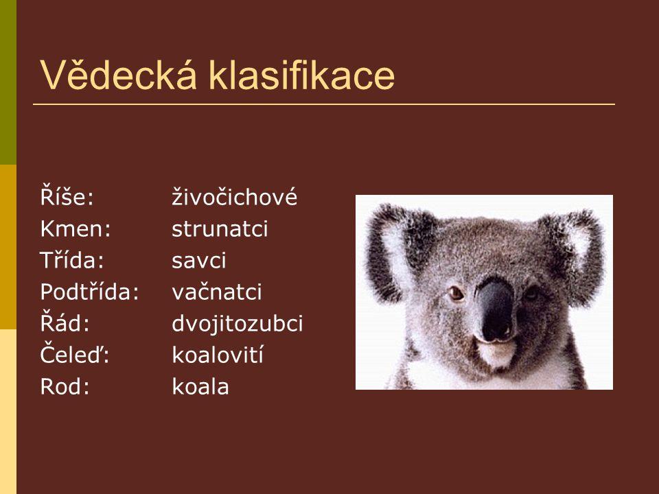 Vědecká klasifikace Říše: živočichové Kmen: strunatci Třída:savci Podtřída: vačnatci Řád:dvojitozubci Čeleď:koalovití Rod: koala