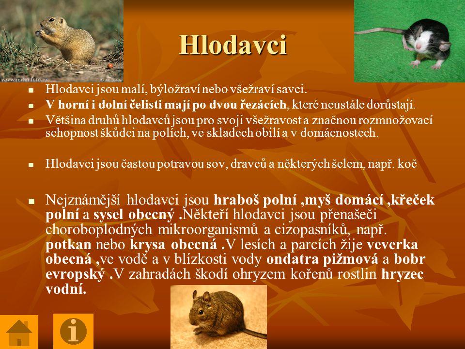 Hlodavci Hlodavci jsou malí, býložraví nebo všežraví savci.