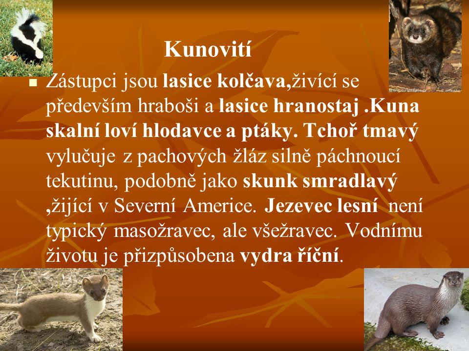 Kunovití Zástupci jsou lasice kolčava,živící se především hraboši a lasice hranostaj.Kuna skalní loví hlodavce a ptáky.