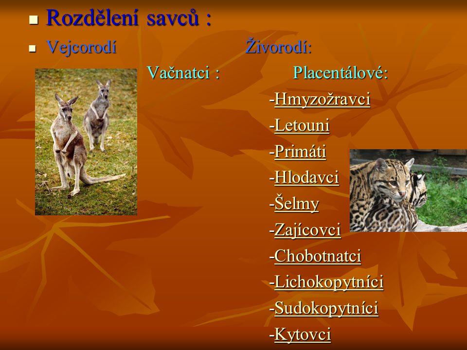 Vejcorodí Do této podtřídy patří primitivní savci s výraznými znaky svých plazích předků.