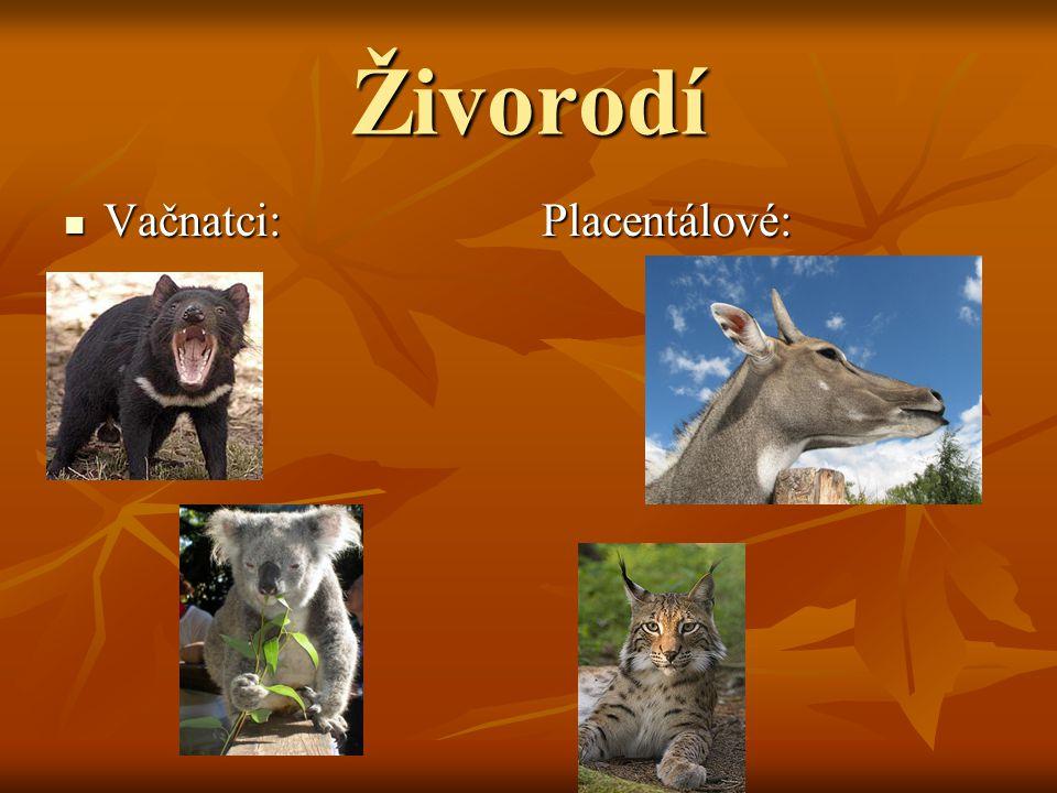 Psovití Zástupci jsou vlk,liška obecná,liška polární,šakal obecný,kojot prériový a pes domácí.