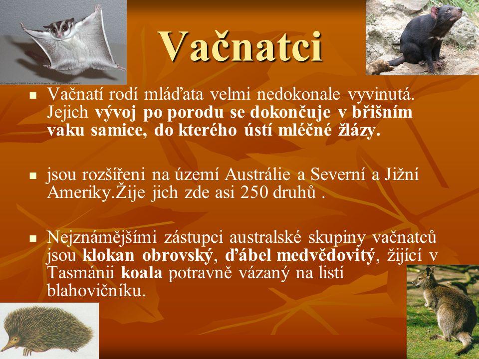 Ploutvonožci Ploutvonožci Ploutvonožci jsou šelmy přizpůsobené životu ve vodě, zejména v mořích.
