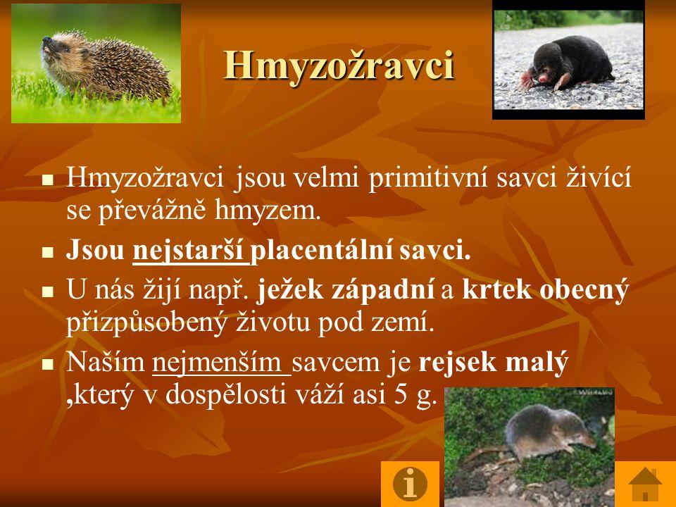 Hmyzožravci Hmyzožravci jsou velmi primitivní savci živící se převážně hmyzem.
