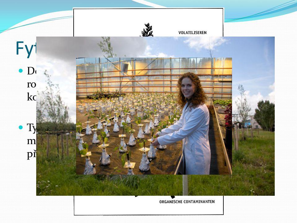 Fytoremediace Definováno jako technologie využívající zelené rostliny k fixaci, akumulaci a rozkladu nebezpečných kontaminantů z vody, půdy a vzduchu