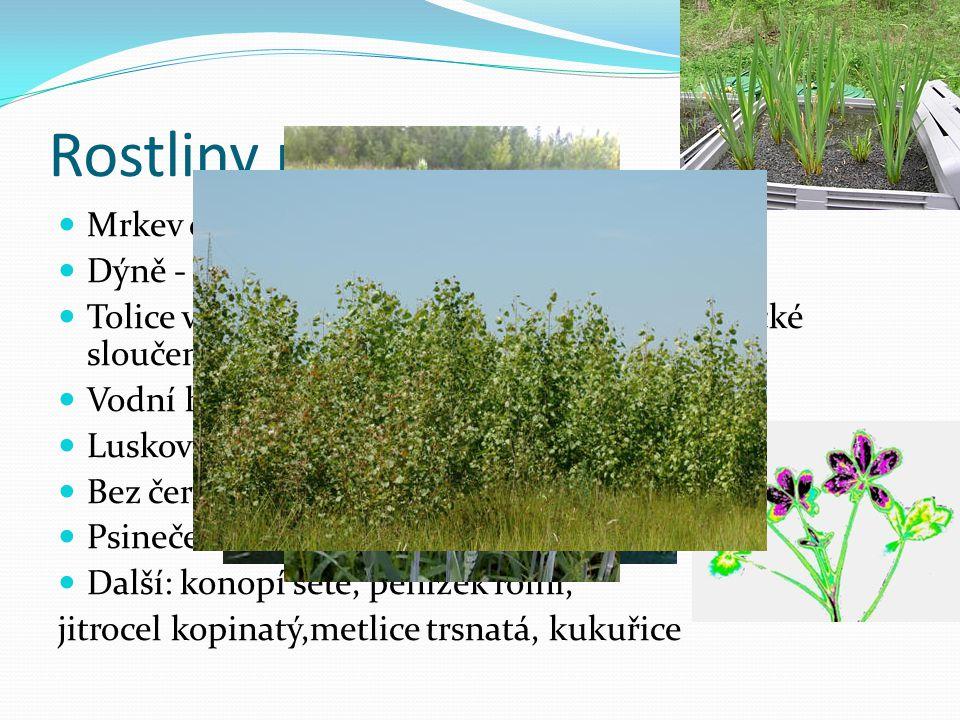 Rostliny příklady Mrkev obecná - absorbuje ddt Dýně - absorbuje dibenzofurany Tolice vojtěška - absorbuje chlorované organické sloučeniny Vodní hyacin