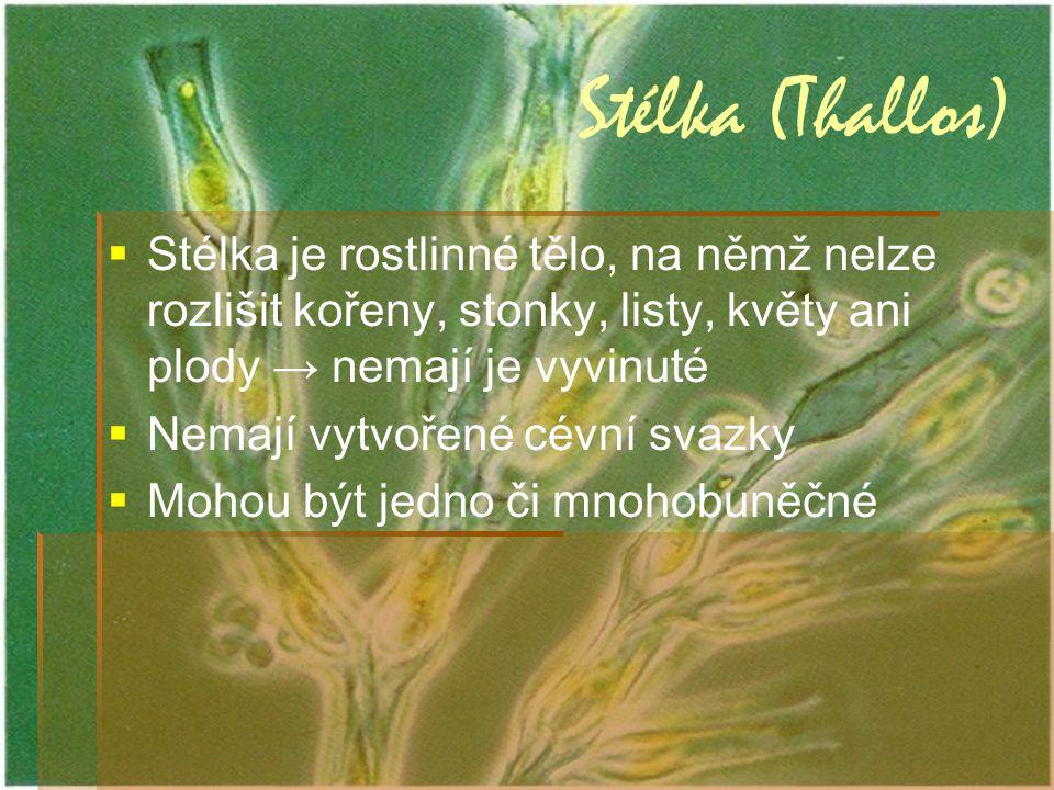 Stélka (Thallos)   Stélka je rostlinné tělo, na němž nelze rozlišit kořeny, stonky, listy, květy ani plody → nemají je vyvinuté   Nemají vytvořené