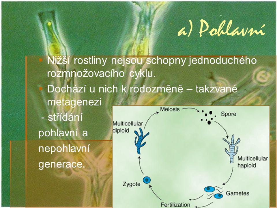 a) Pohlavní   Nižší rostliny nejsou schopny jednoduchého rozmnožovacího cyklu.   Dochází u nich k rodozměně – takzvané metagenezi - střídání pohla