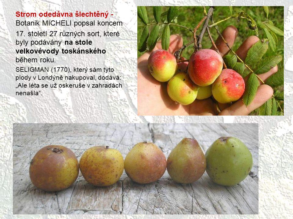 Strom odedávna šlechtěný - Botanik MICHELI popsal koncem 17. století 27 různých sort, které byly podávány na stole velkovévody toskánského během roku.