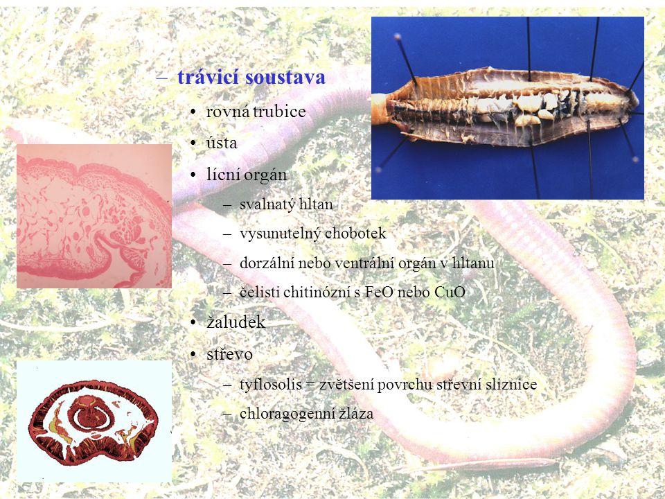 parapodia = panožky –nesegmentované (kloubně nepřipojené) –měkké, vystužené silnou osní štětinou acikulem –s množstvím tenkých ohebných štětin (chitinózních) –připojeno několik svalů vycházejících z tělní okružní svaloviny –horní lalok = notopodium (smyslová a dýchací funkce) –spodní lalok neuropodium (obvykle slouží k pohybu) –u mnoha skupin málo vyvinuté až samotné svazečky štětin štětiny - chéty, séty –chitinové válečky spojené skleroproteinem –produkují vnořené epidermální buňky kutikula