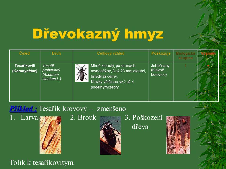 Dřevokazný hmyz ČeleďDruhCelkový vzhledPoškozujeBiologická skupina Význam Tesaříkovití (Cerabycidae) Tesařík zavalitý (Ergatex faber faber L.) Robusní