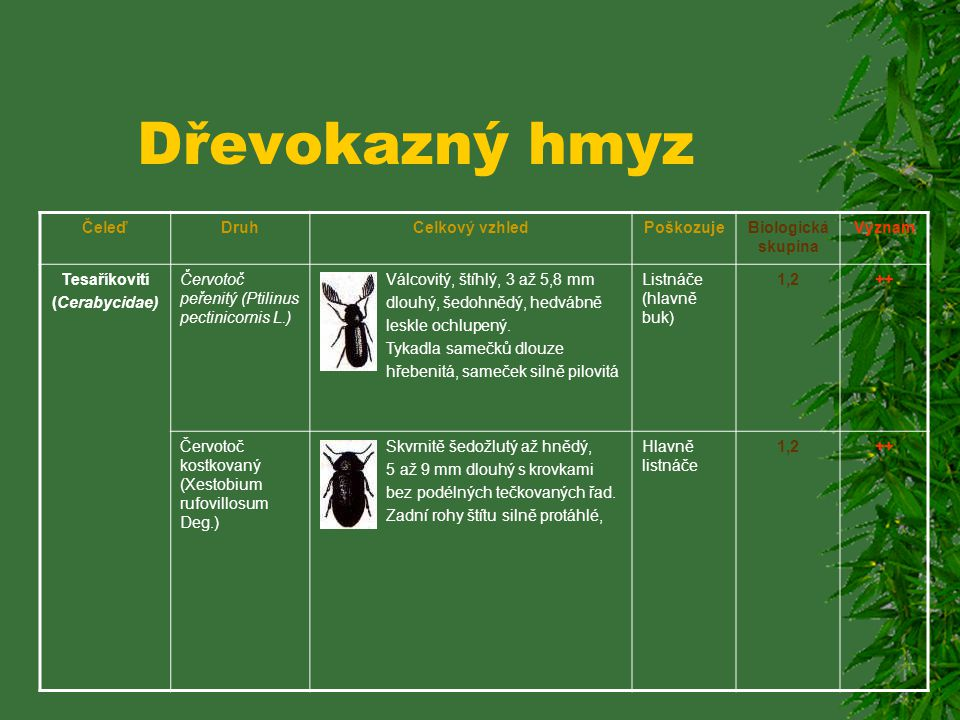 Dřevokazný hmyz ČeleďDruhCelkový vzhledPoškozujeBiologická skupina Význam Červotočovití (Anobiidae) Červotoč proužkovaný (Anobium punctatum Deg.) Šedo