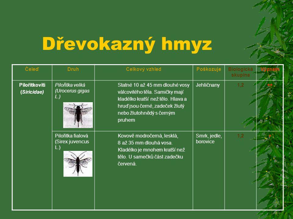 Dřevokazný hmyz ČeleďDruhCelkový vzhledPoškozujeBiologická skupina Význam Korkovníkovití (BostrYchidae Korkovník dubový (Bostrychus capucinus L.) Válc