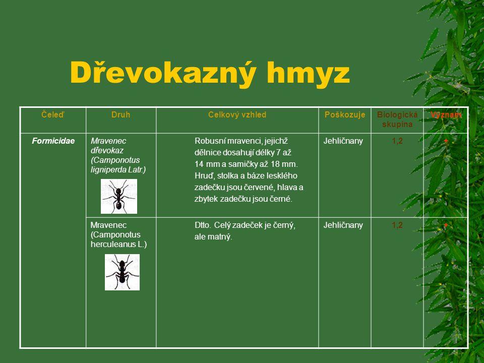 Dřevokazný hmyz ČeleďDruhCelkový vzhledPoškozujeBiologická skupina Význam Pilořitkovití (Siricidae) Pilořitka černá (Xeris spectrum L.) Štíhlá, černá,