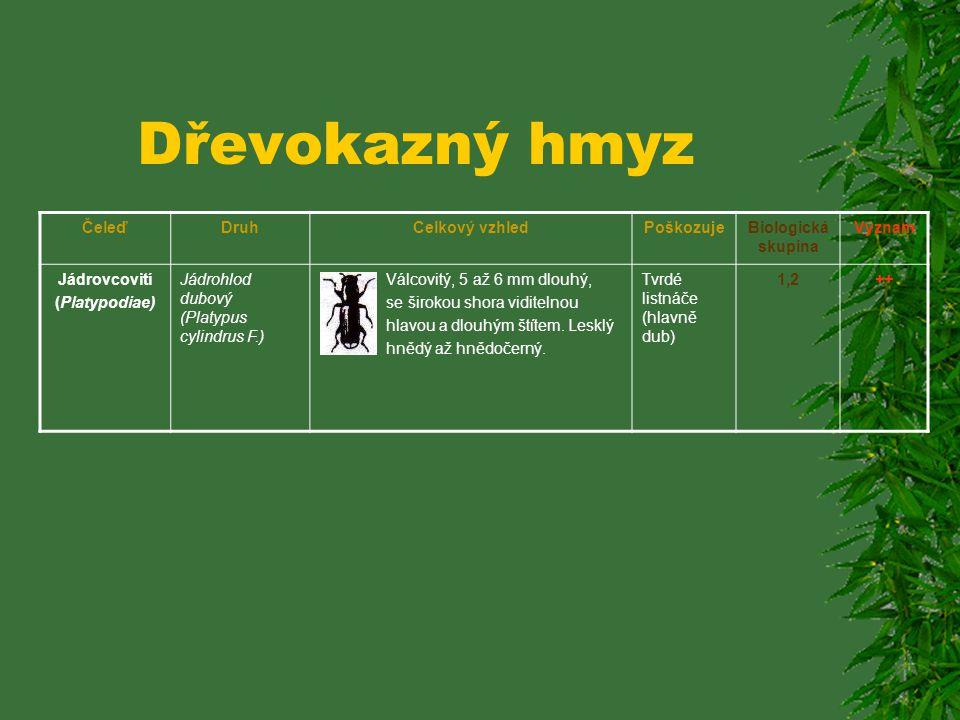 Dřevokazný hmyz ČeleďDruhCelkový vzhledPoškozujeBiologická skupina Význam Kůrovcovití (Scolitidae) Dřevokaz čárkovaný (Xyloterus lineatus Ol.) Válcovi