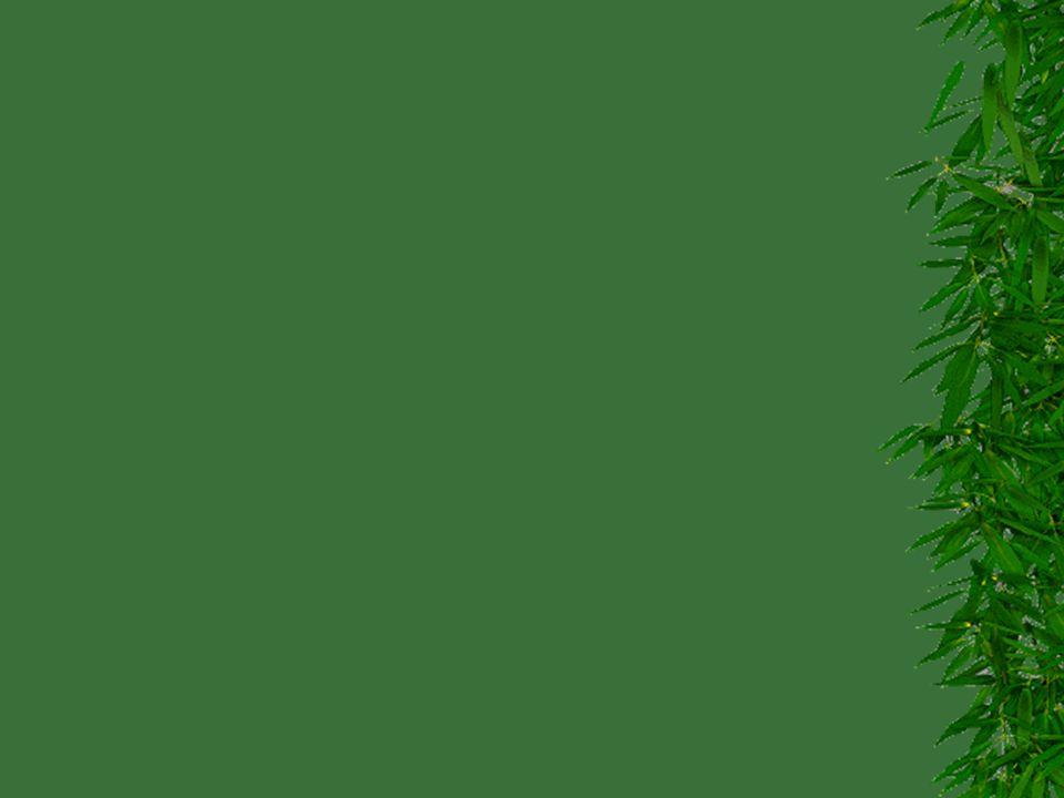 Dřevokazný hmyz ČeleďDruhCelkový vzhledPoškozujeBiologická skupina Význam Tesaříkovití (Cerabycidae)