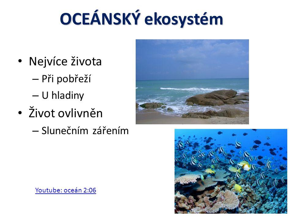Fytoplankton Jednobuděčné rostliny Jednobuděčné rostliny Fotosyntéza 1.
