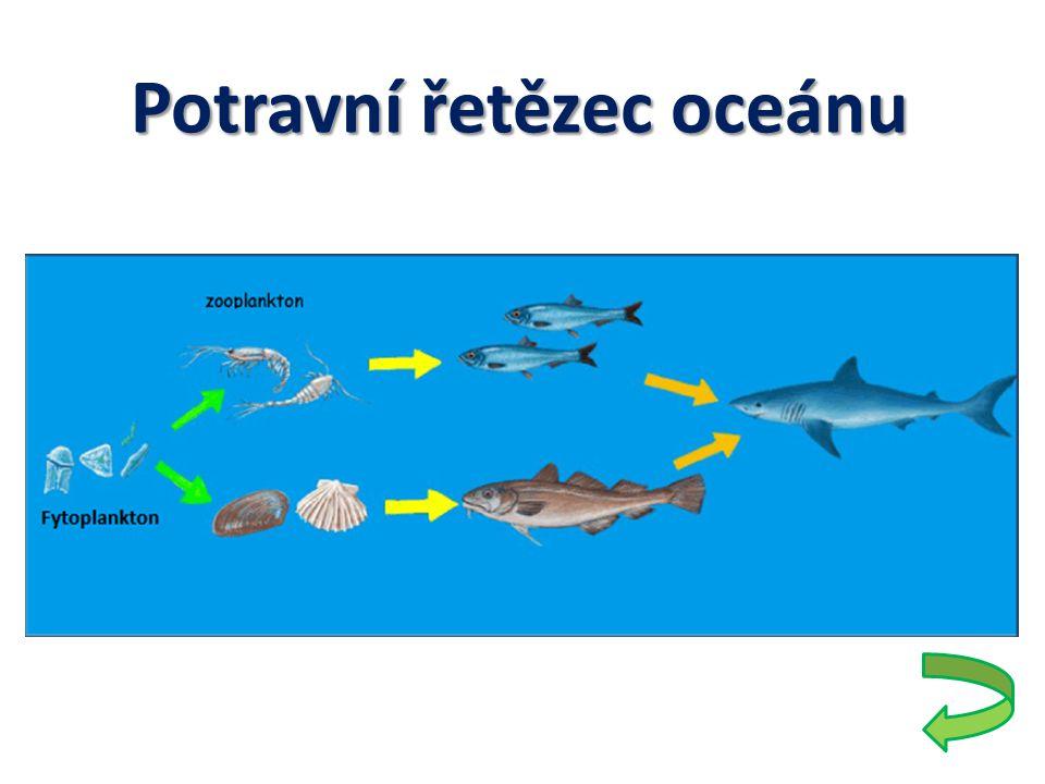 Ohrožení Znečištění pobřeží Znečištění pobřeží – Vypouštění odpadních vod → těžké kovy → rybí maso → potrava lidí Youtube: Ocean pollution 2:43