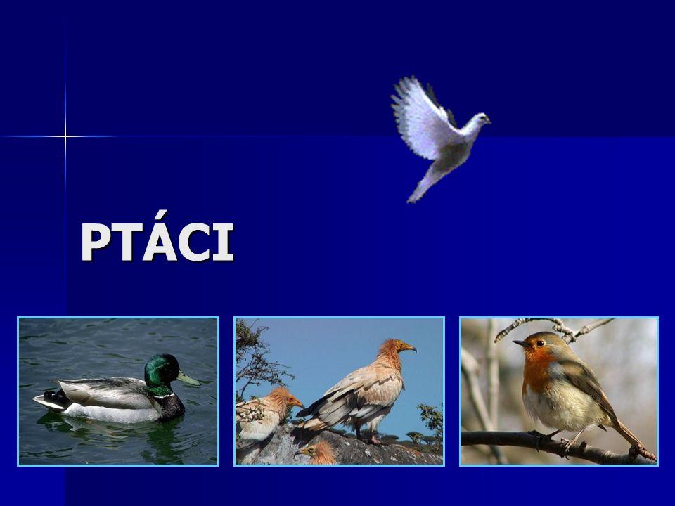 SOŠS a SOU KadaňZoologie - Ptáci62 Pěvci Nejpočetnější řád letců – 9 000 druhů.