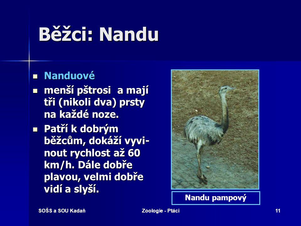 SOŠS a SOU KadaňZoologie - Ptáci11 Běžci: Nandu Nanduové Nanduové menší pštrosi a mají tři (nikoli dva) prsty na každé noze.