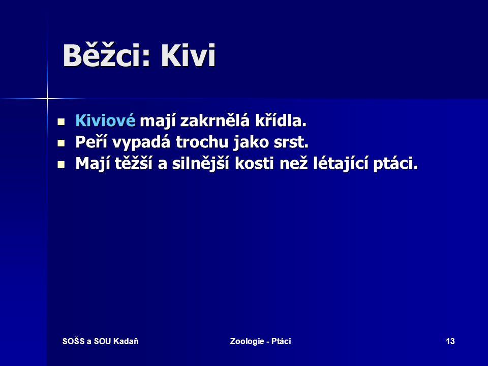 SOŠS a SOU KadaňZoologie - Ptáci13 Běžci: Kivi Kiviové mají zakrnělá křídla.