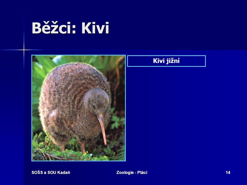 SOŠS a SOU KadaňZoologie - Ptáci14 Běžci: Kivi Kivi jižní