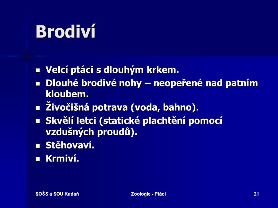 SOŠS a SOU KadaňZoologie - Ptáci21 Brodiví Velcí ptáci s dlouhým krkem.